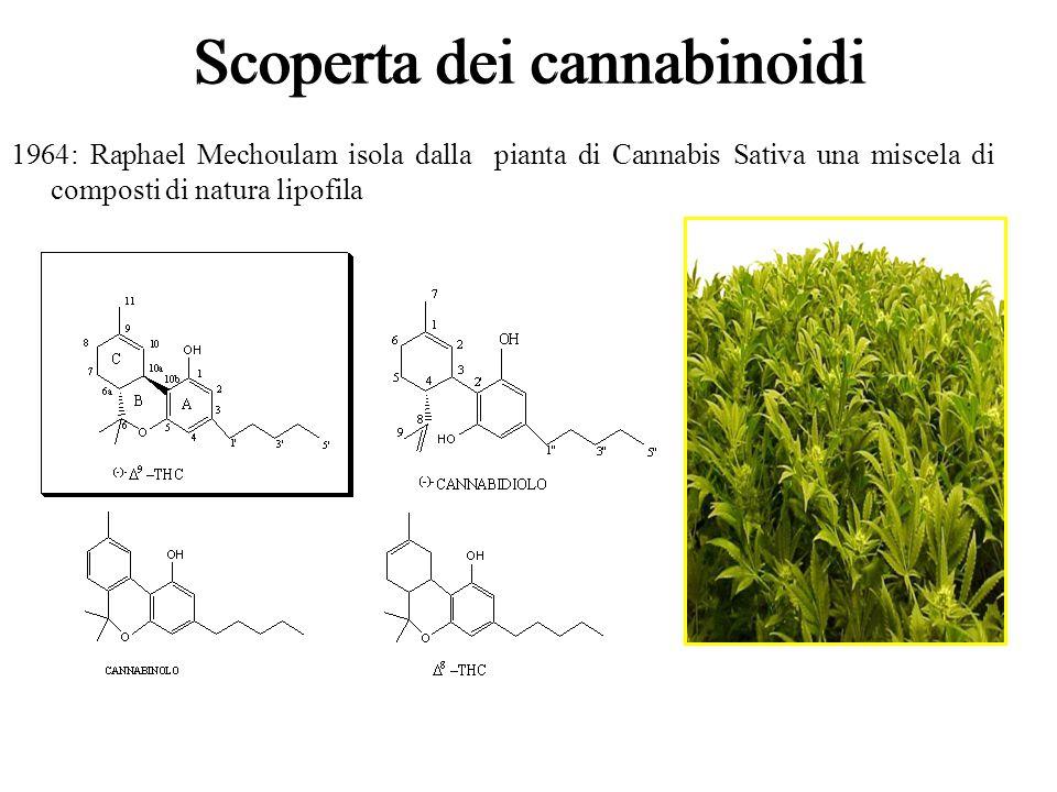 Scoperta dei cannabinoidi Scoperta dei cannabinoidi