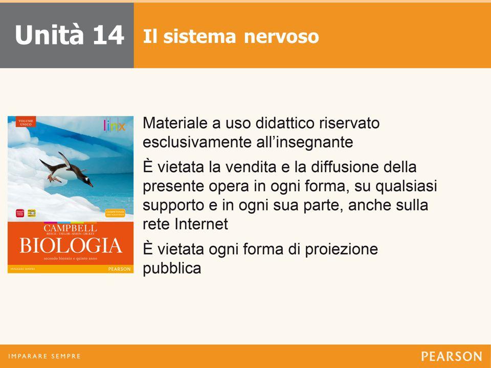 Unità 14 Il sistema nervoso