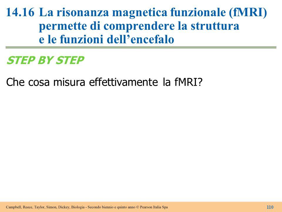 14.16 La risonanza magnetica funzionale (fMRI) permette di comprendere la struttura e le funzioni dell'encefalo