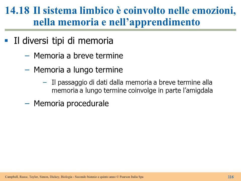 14.18 Il sistema limbico è coinvolto nelle emozioni, nella memoria e nell'apprendimento