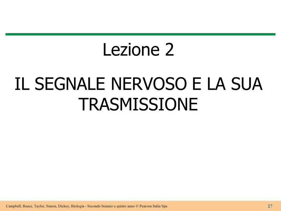 Lezione 2 IL SEGNALE NERVOSO E LA SUA TRASMISSIONE