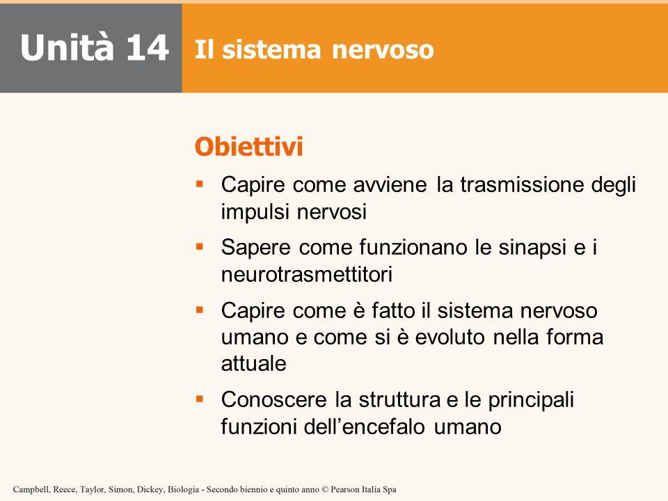 Unità 14 Il sistema nervoso Obiettivi