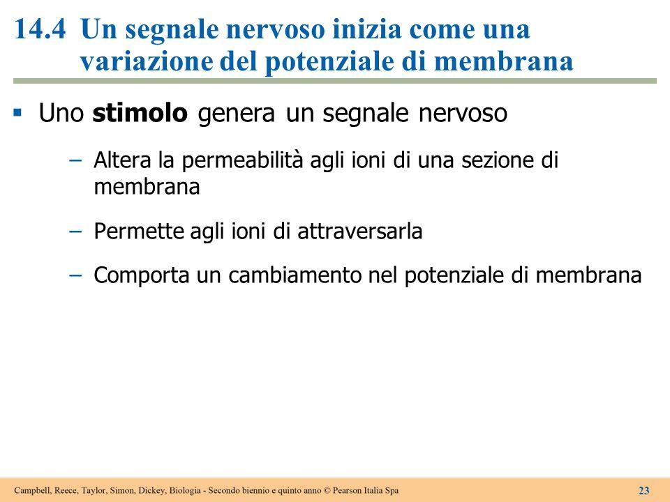 14.4 Un segnale nervoso inizia come una variazione del potenziale di membrana