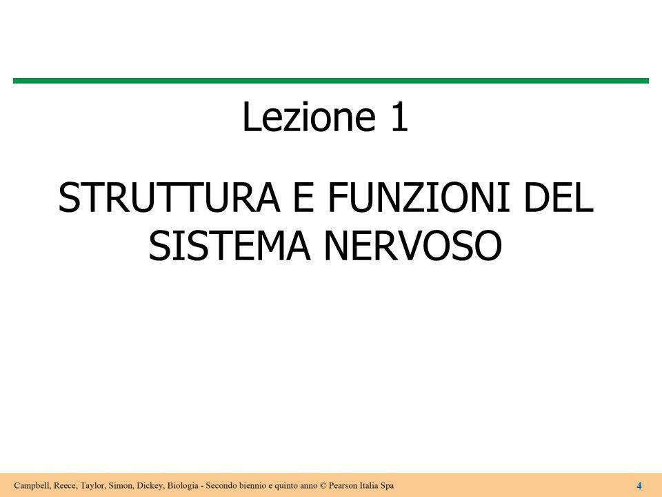 Lezione 1 STRUTTURA E FUNZIONI DEL SISTEMA NERVOSO