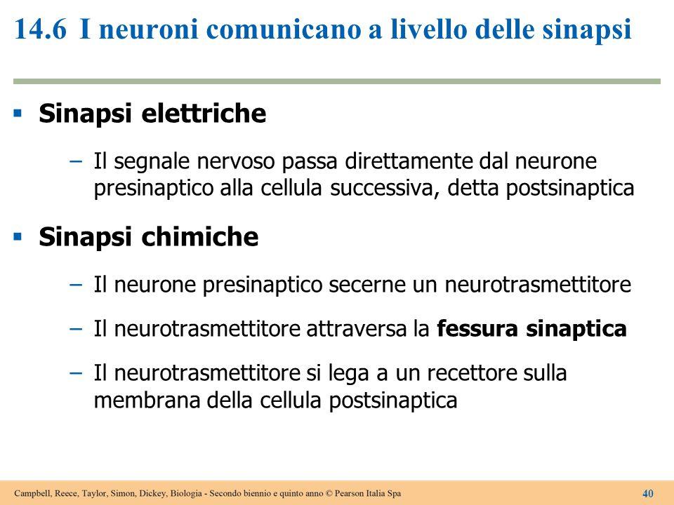 14.6 I neuroni comunicano a livello delle sinapsi