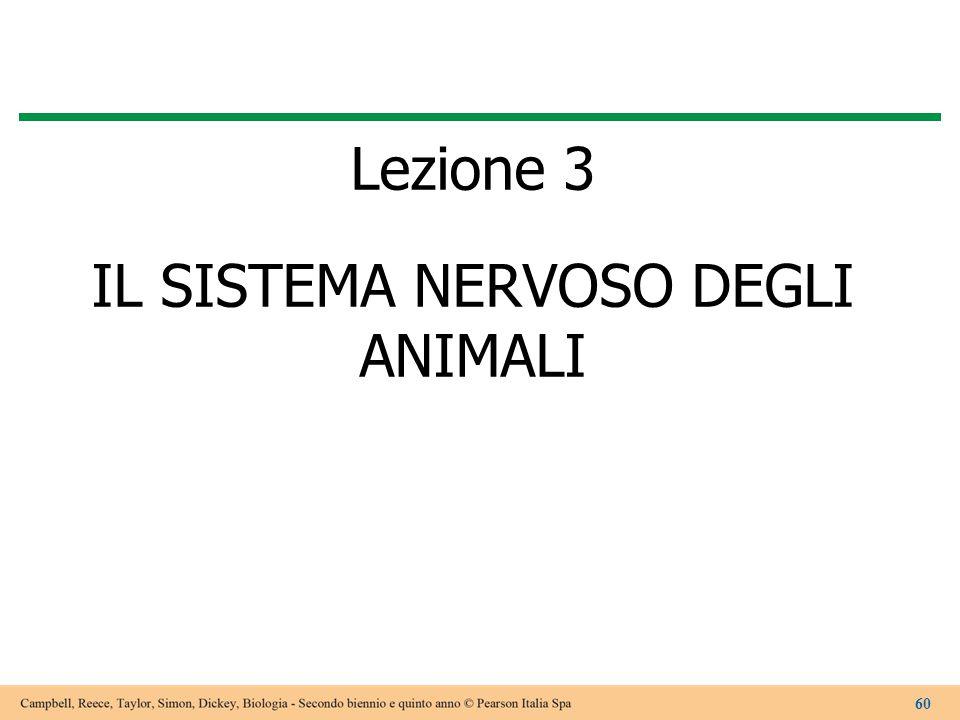 Lezione 3 IL SISTEMA NERVOSO DEGLI ANIMALI