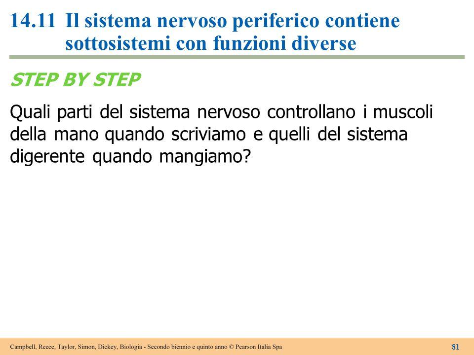 14.11 Il sistema nervoso periferico contiene sottosistemi con funzioni diverse