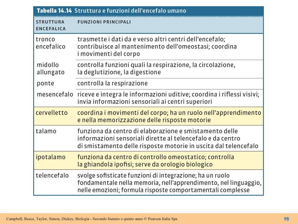 Tabella 14.14 Struttura e funzioni dell'encefalo umano