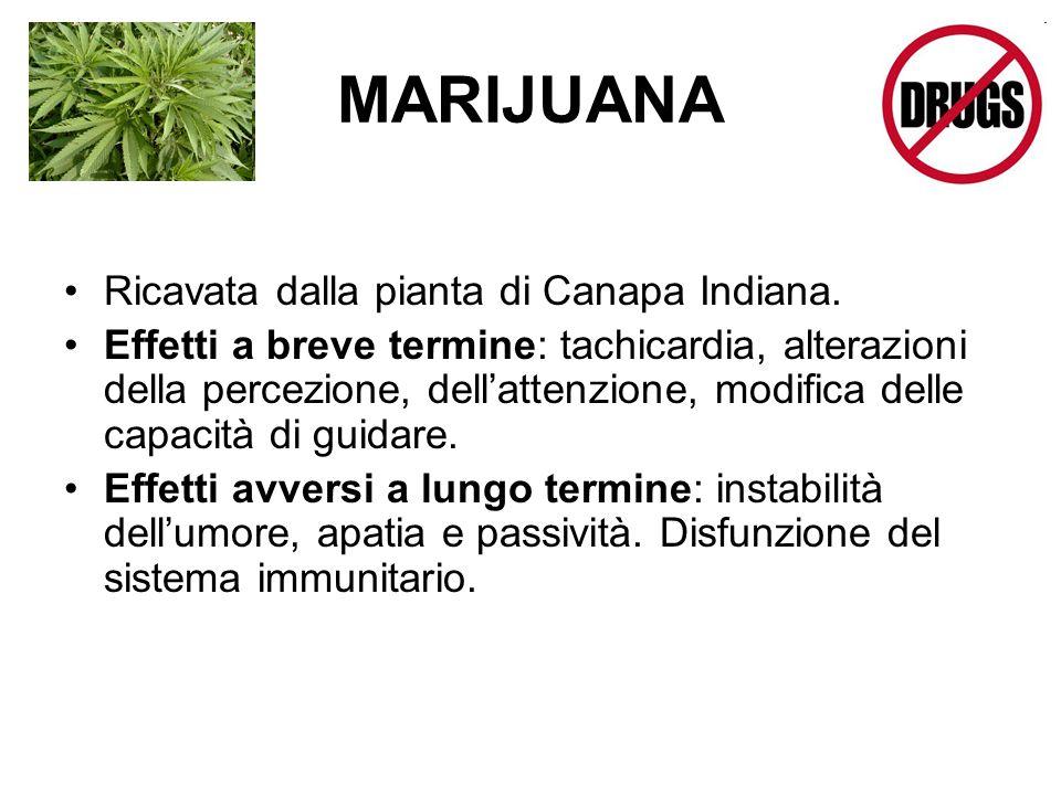 MARIJUANA Ricavata dalla pianta di Canapa Indiana.