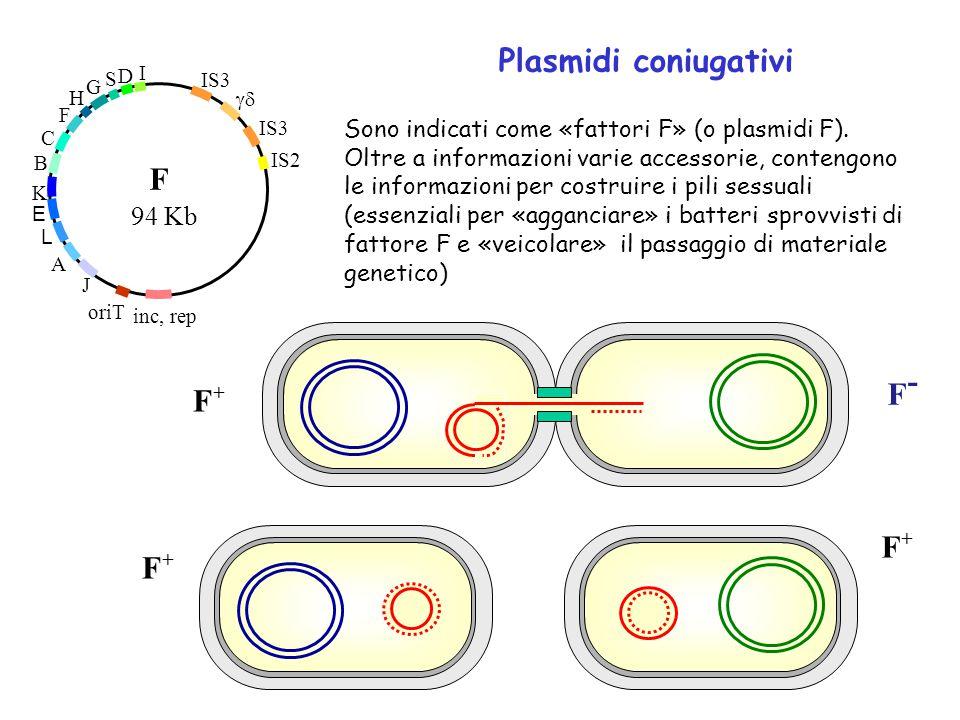 Plasmidi coniugativi F- F+ F+ 94 Kb