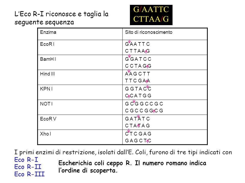 L'Eco R-I riconosce e taglia la seguente sequenza