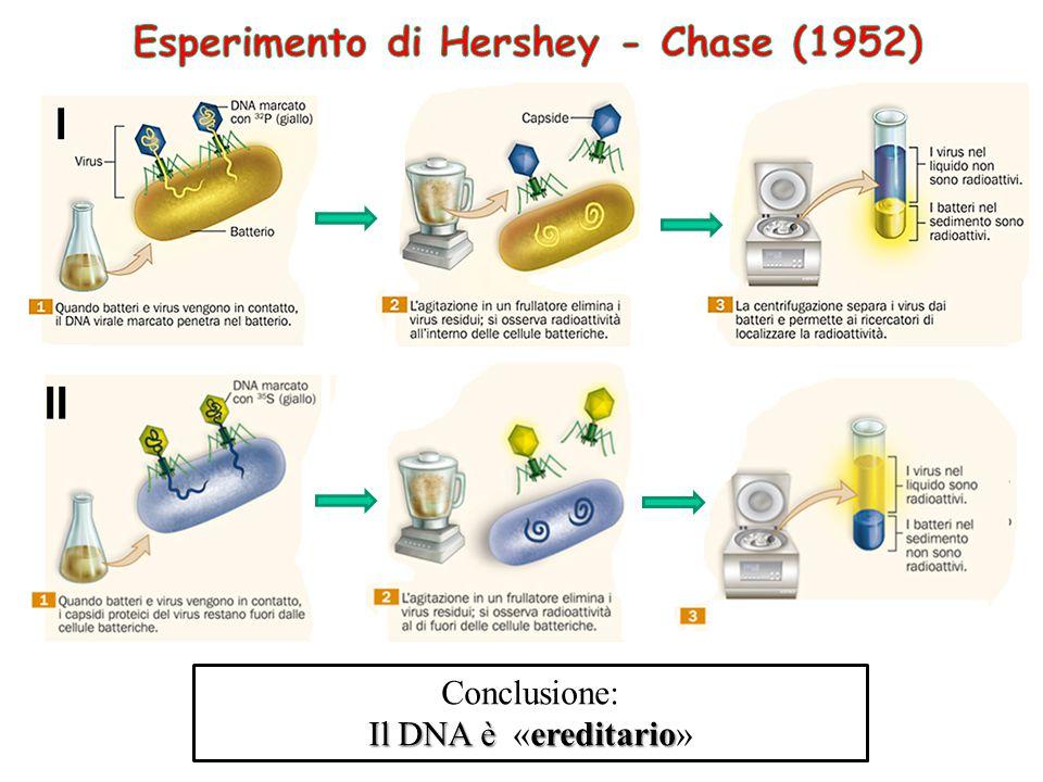 Esperimento di Hershey - Chase (1952)