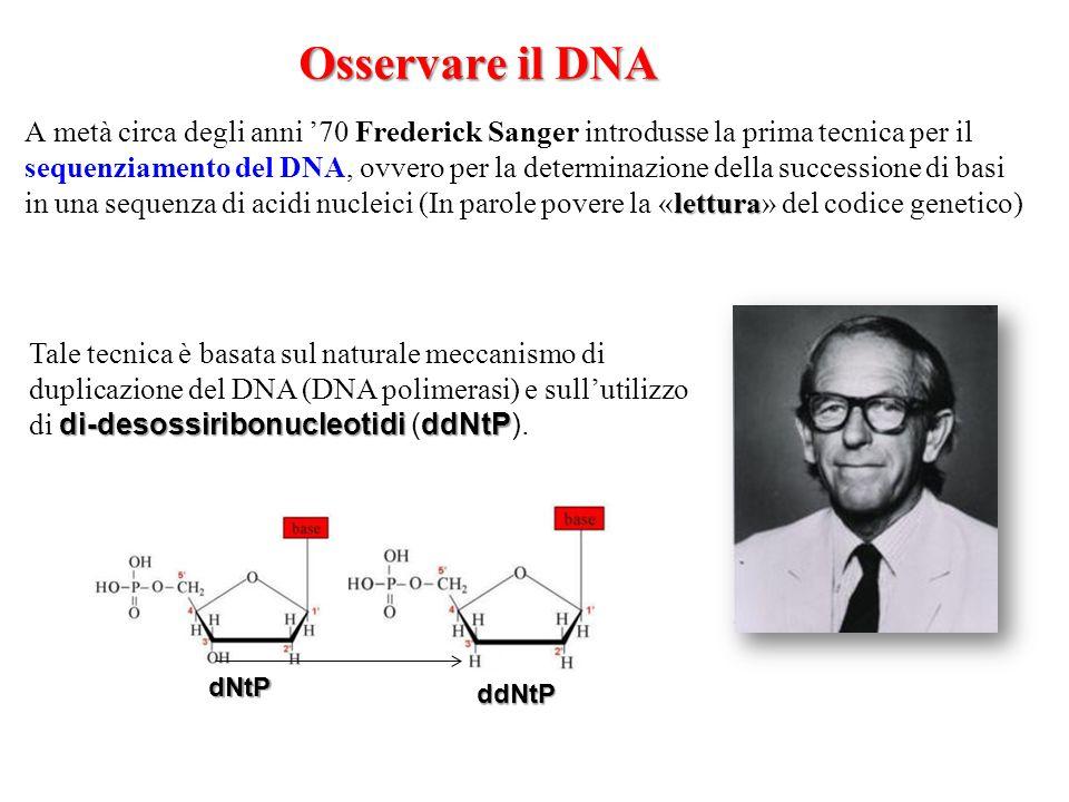 Osservare il DNA