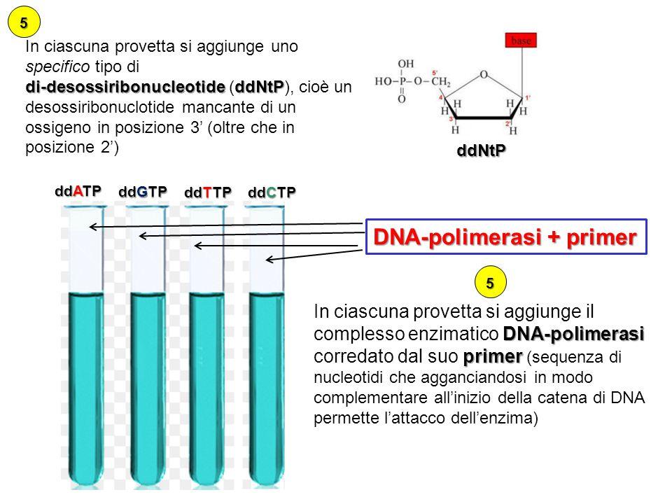 DNA-polimerasi + primer