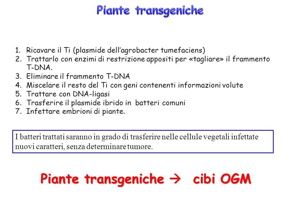 Piante transgeniche  cibi OGM
