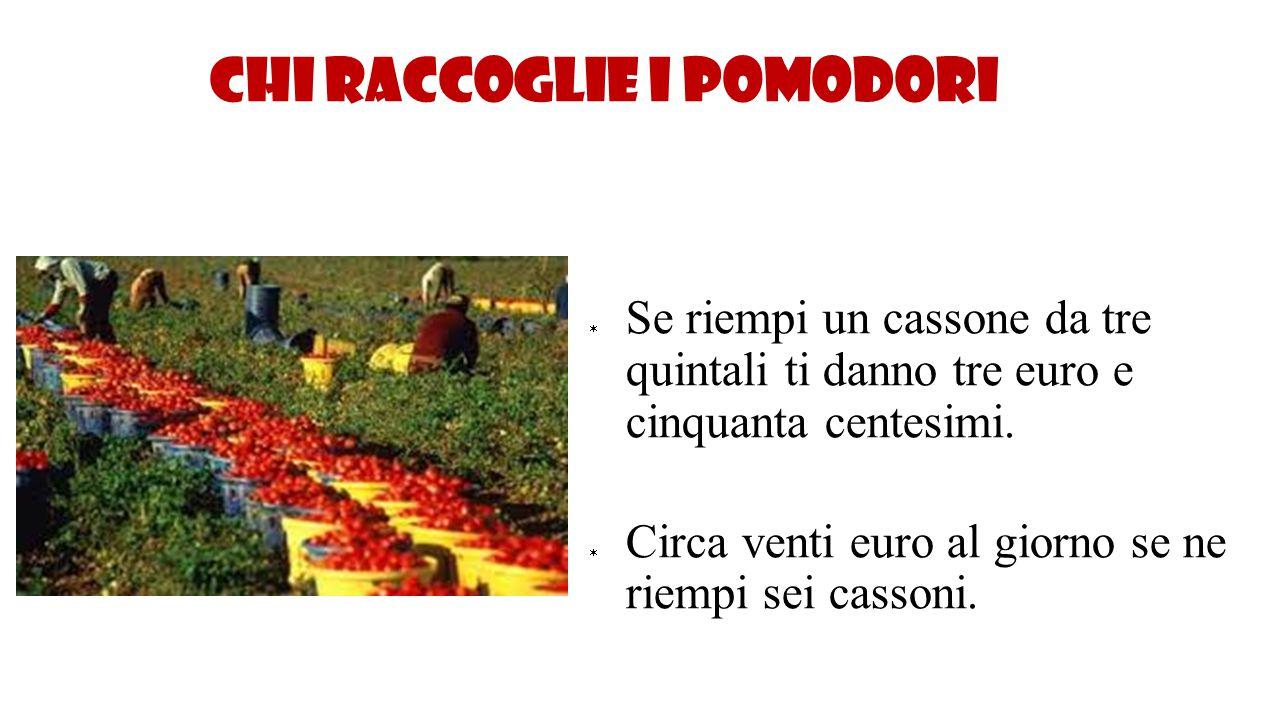 Chi raccoglie i pomodori