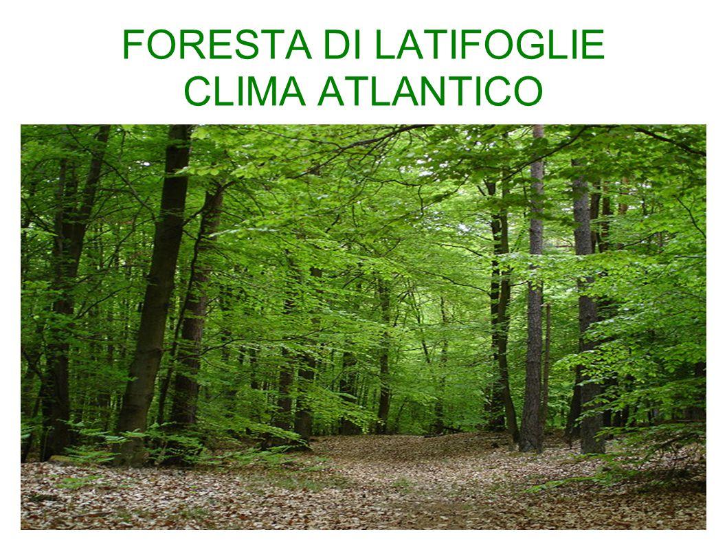 FORESTA DI LATIFOGLIE CLIMA ATLANTICO