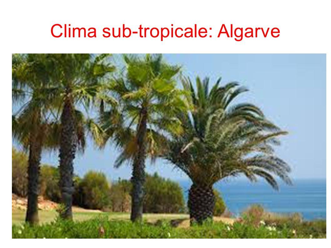 Clima sub-tropicale: Algarve