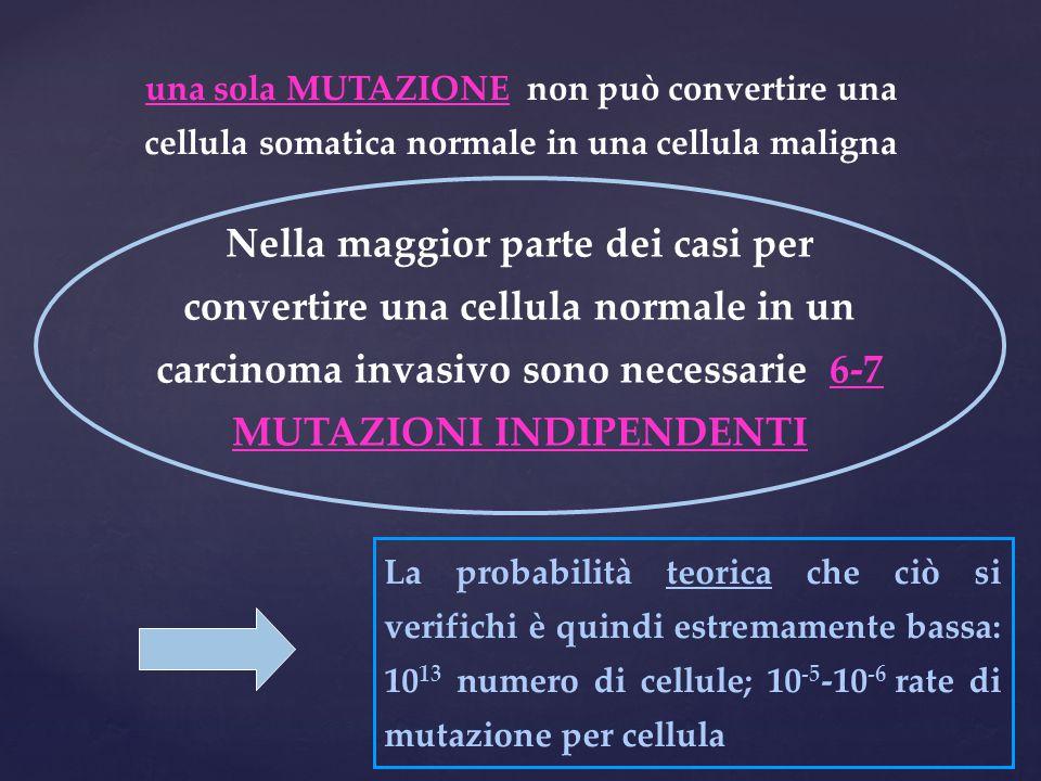 una sola MUTAZIONE non può convertire una cellula somatica normale in una cellula maligna