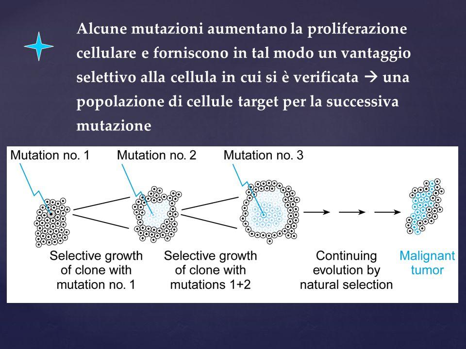 Alcune mutazioni aumentano la proliferazione cellulare e forniscono in tal modo un vantaggio selettivo alla cellula in cui si è verificata  una popolazione di cellule target per la successiva mutazione