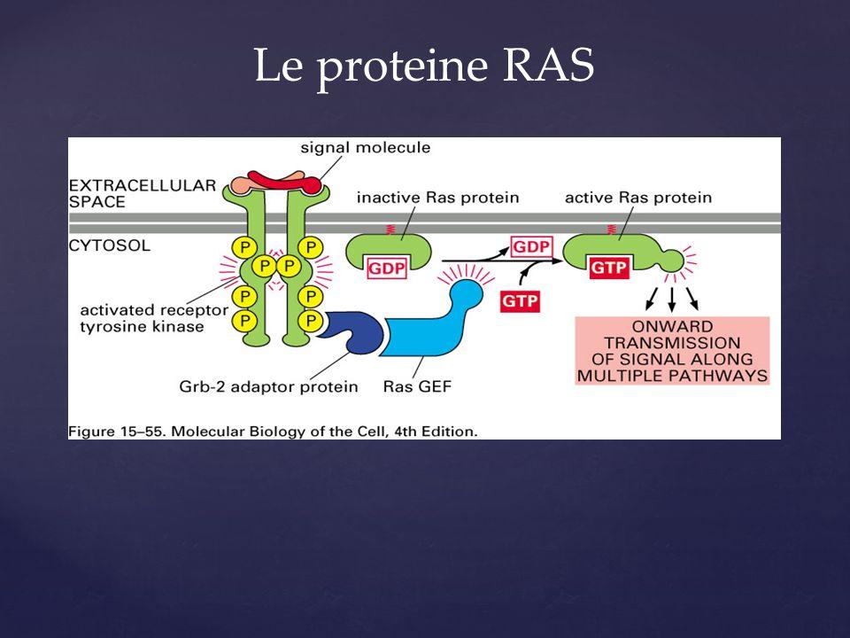 Le proteine RAS