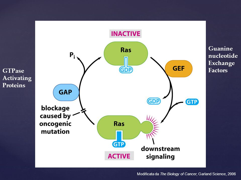 Guanine nucleotide Exchange Factors GTPase Activating Proteins