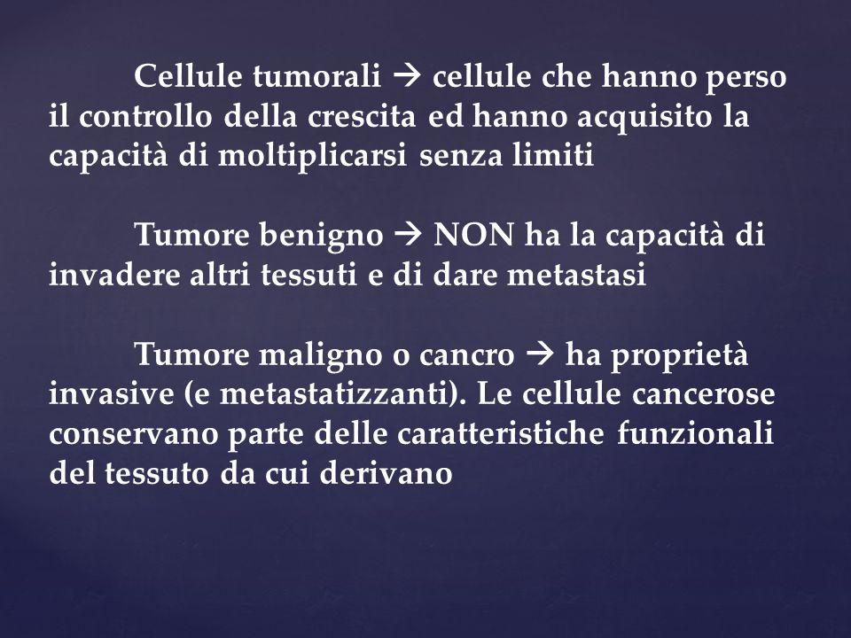 Cellule tumorali  cellule che hanno perso il controllo della crescita ed hanno acquisito la capacità di moltiplicarsi senza limiti