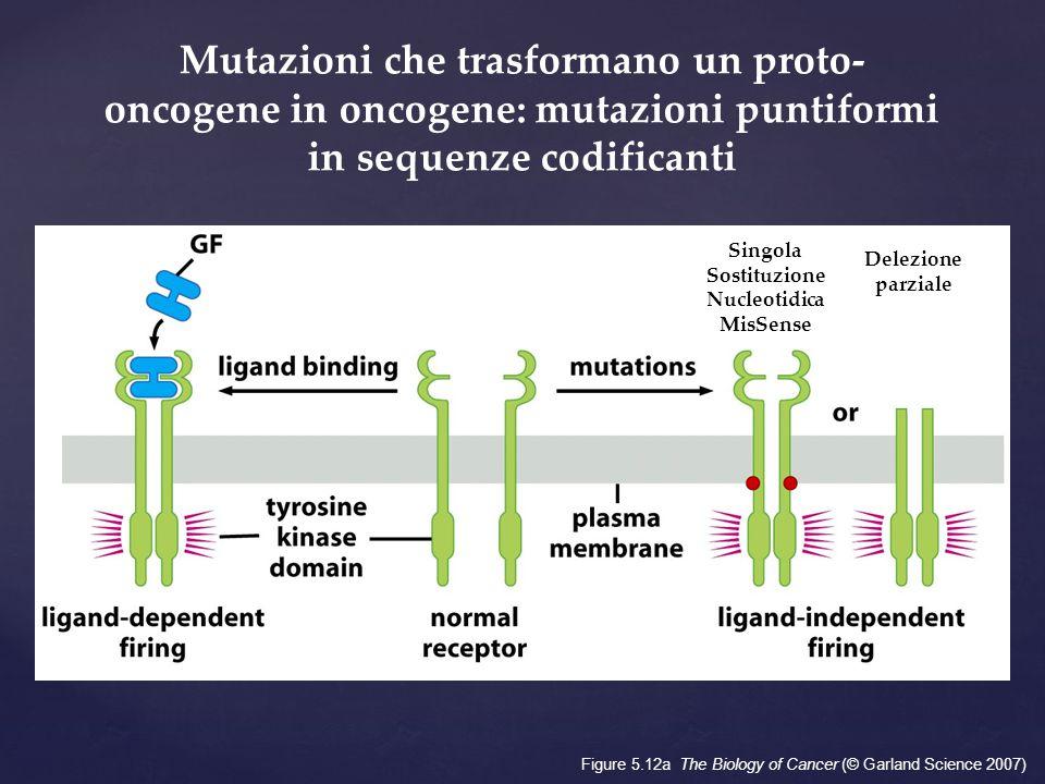 Singola Sostituzione Nucleotidica MisSense