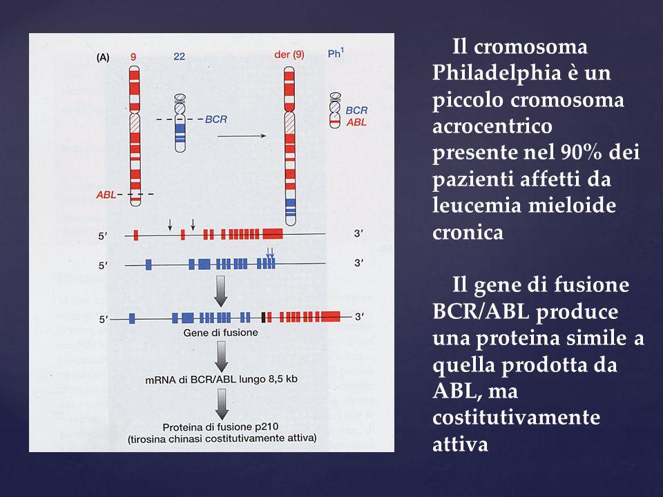 Il cromosoma Philadelphia è un piccolo cromosoma acrocentrico presente nel 90% dei pazienti affetti da leucemia mieloide cronica