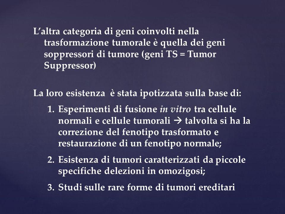 L'altra categoria di geni coinvolti nella trasformazione tumorale è quella dei geni soppressori di tumore (geni TS = Tumor Suppressor)