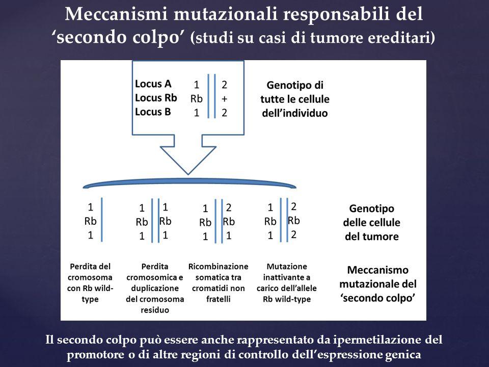 Meccanismi mutazionali responsabili del 'secondo colpo' (studi su casi di tumore ereditari)