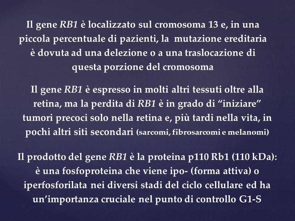 Il gene RB1 è localizzato sul cromosoma 13 e, in una piccola percentuale di pazienti, la mutazione ereditaria è dovuta ad una delezione o a una traslocazione di questa porzione del cromosoma