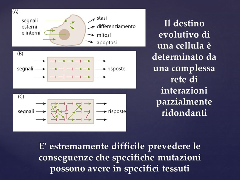 Il destino evolutivo di una cellula è determinato da una complessa rete di interazioni parzialmente ridondanti