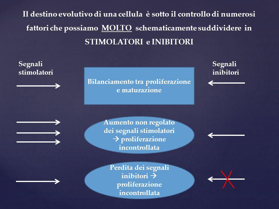 Il destino evolutivo di una cellula è sotto il controllo di numerosi fattori che possiamo MOLTO schematicamente suddividere in STIMOLATORI e INIBITORI
