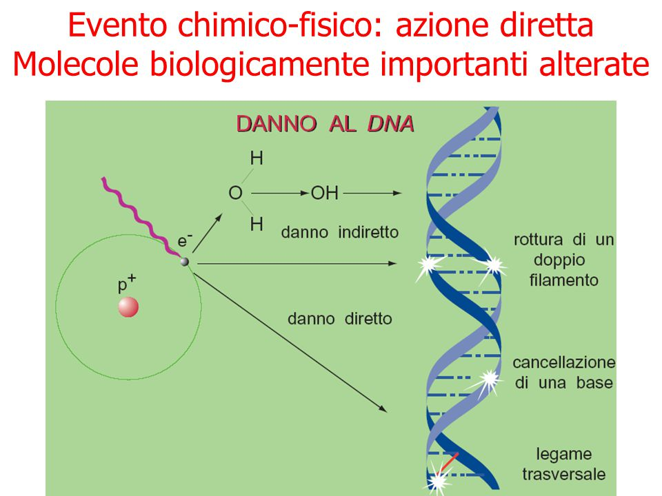 Evento chimico-fisico: azione diretta Molecole biologicamente importanti alterate