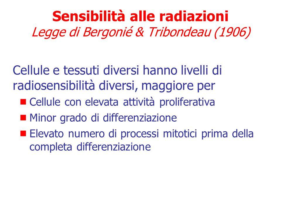 Sensibilità alle radiazioni Legge di Bergonié & Tribondeau (1906)
