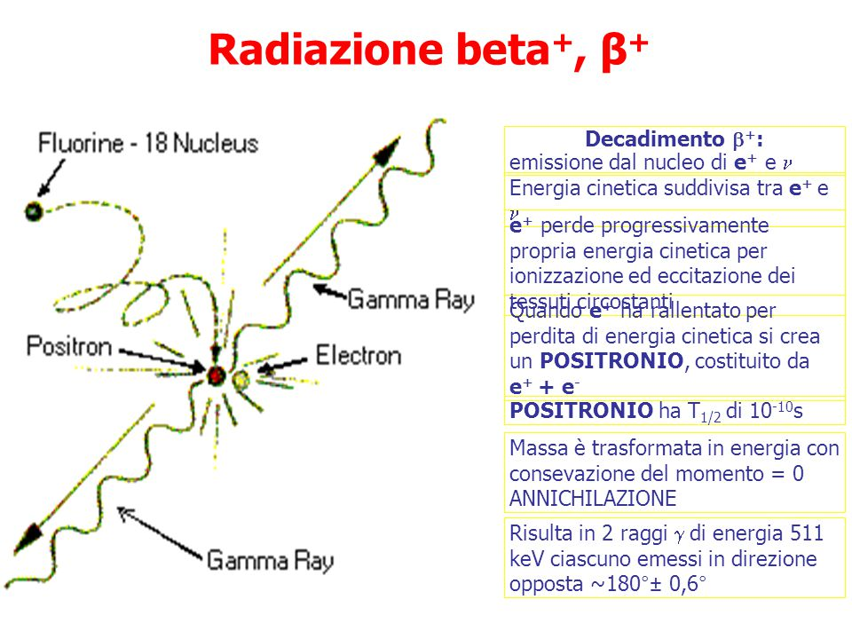 Radiazione beta+, β+ Decadimento +: emissione dal nucleo di e+ e 