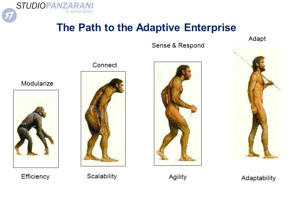 The Path to the Adaptive Enterprise