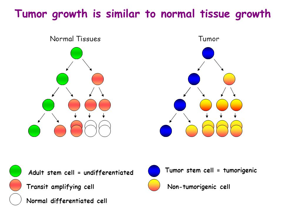 Tumor growth is similar to normal tissue growth