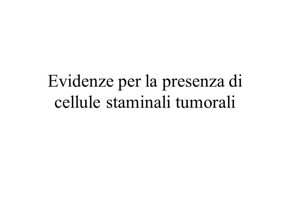 Evidenze per la presenza di cellule staminali tumorali