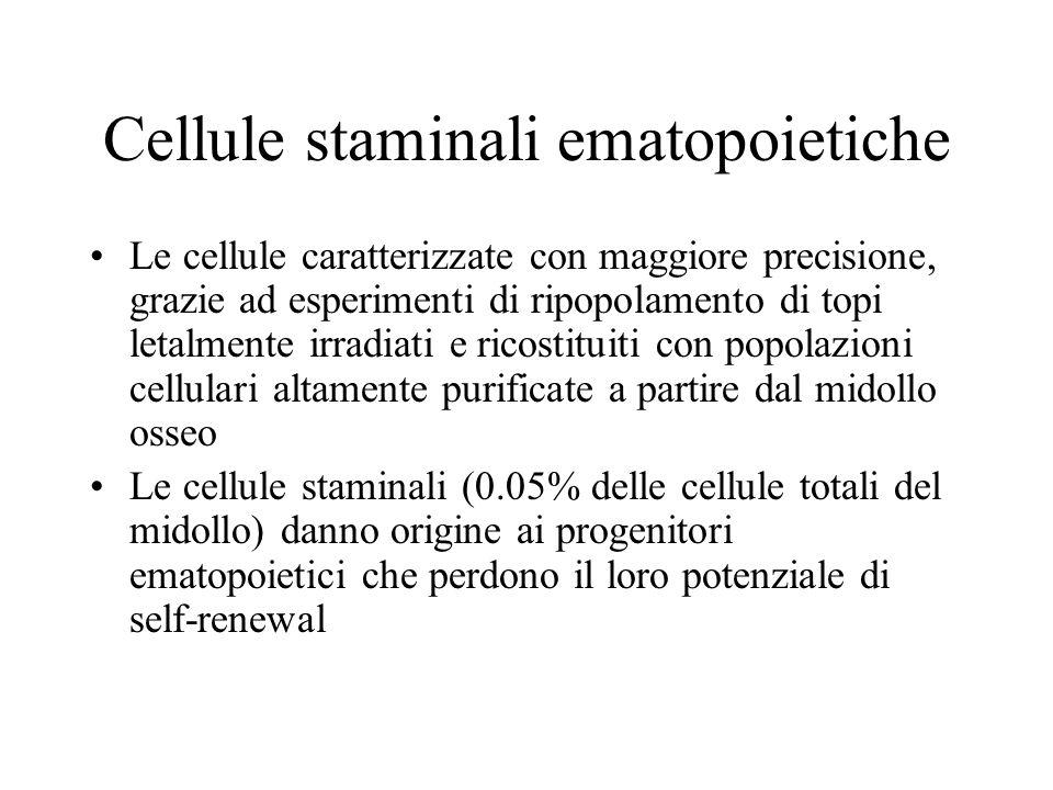Cellule staminali ematopoietiche