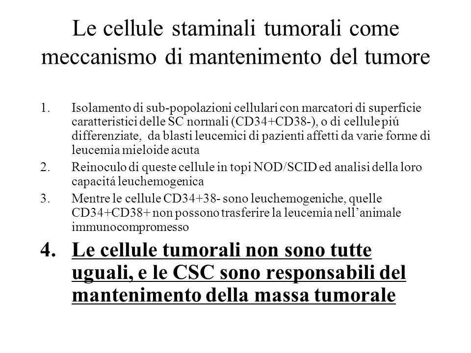 Le cellule staminali tumorali come meccanismo di mantenimento del tumore