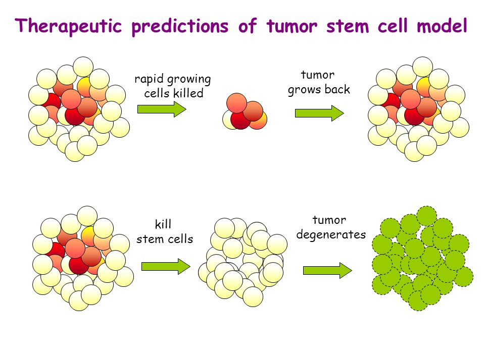 Therapeutic predictions of tumor stem cell model