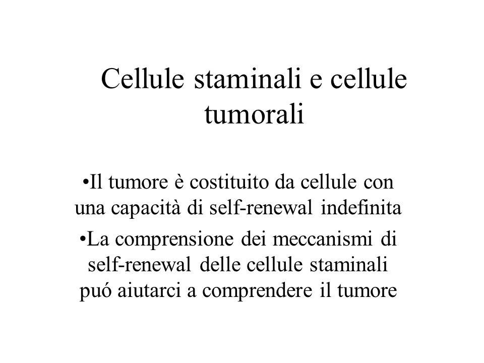 Cellule staminali e cellule tumorali