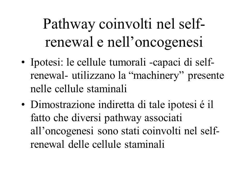 Pathway coinvolti nel self-renewal e nell'oncogenesi
