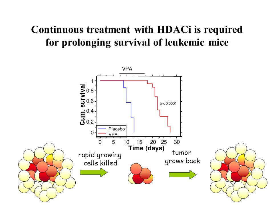 Continuous treatment with HDACi is required for prolonging survival of leukemic mice