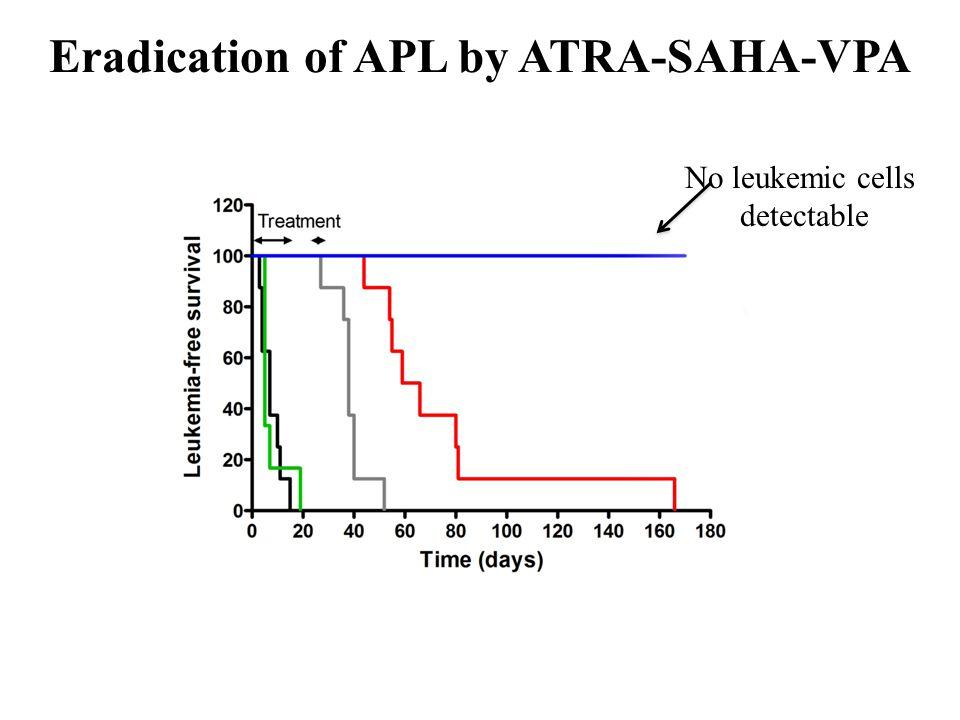 Eradication of APL by ATRA-SAHA-VPA