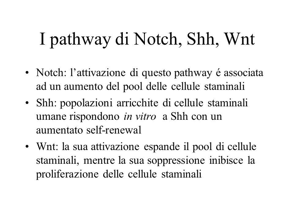 I pathway di Notch, Shh, Wnt