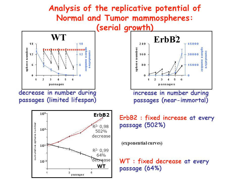 WT ErbB2 Analysis of the replicative potential of
