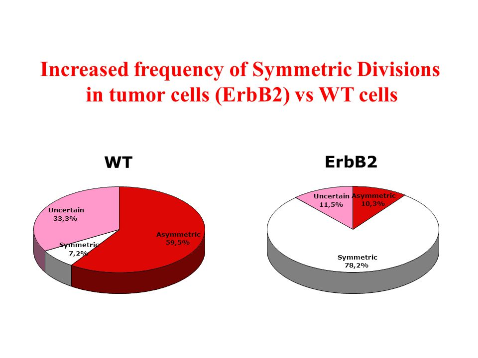 Increased frequency of Symmetric Divisions